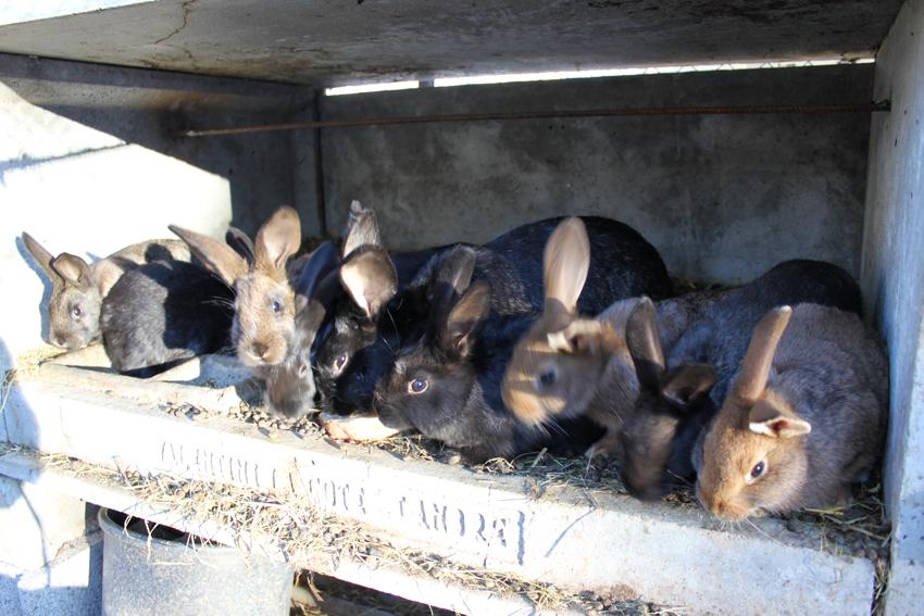 Les lapins le poulailler de zaza for Abreuvoir lapin fait maison
